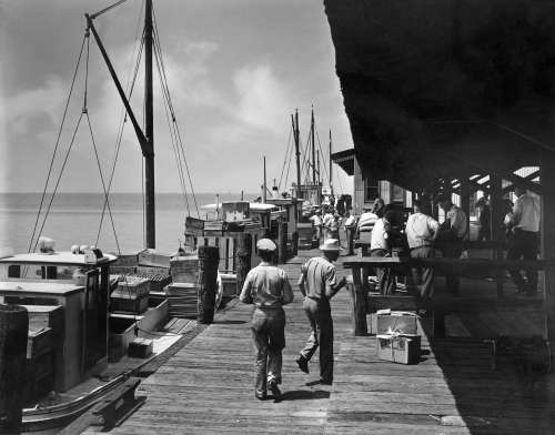 Oyster Buyboats, mailboats.jpg
